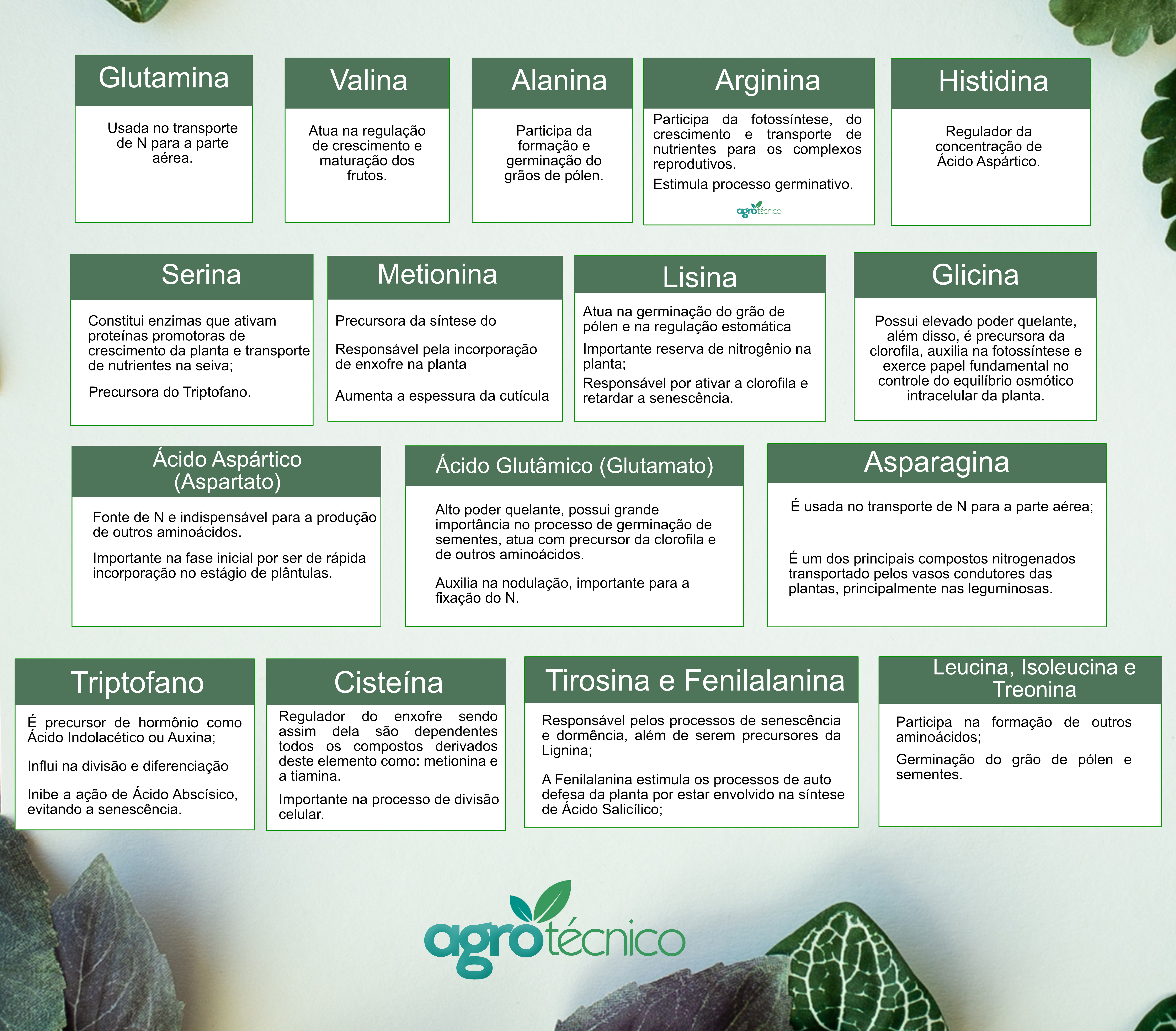 Funções de Aminoácidos